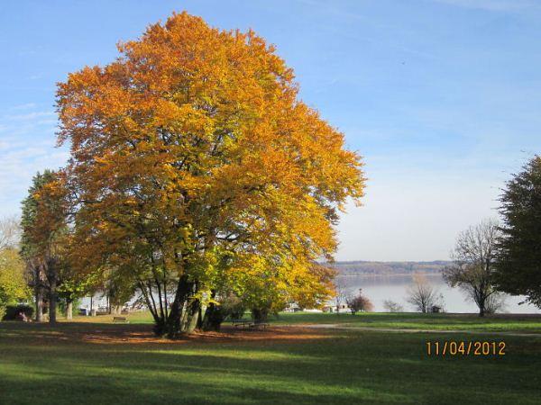 Στα ομορφότερα δέντρα του κόσμου