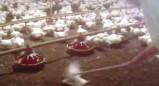 Το βίντεο-φρίκη που έκανε τα McDonald's να αλλάξουν προμηθευτή κοτόπουλου