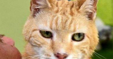 Η μεγαλύτερη σε ηλικία γάτα του κόσμου