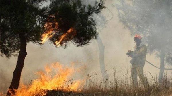 Μάχη με τις φλόγες σε δασική έκταση στην περιοχή Κάλφα Αχαΐας