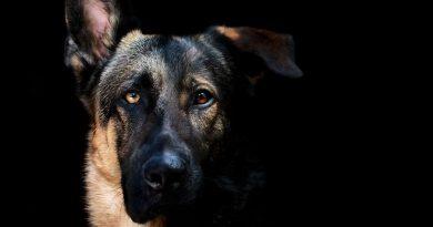 Άνθρωπος δάγκωσε -αστυνομικό- σκύλο στις ΗΠΑ!